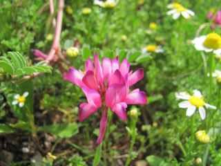Flower From La Marchesa-1