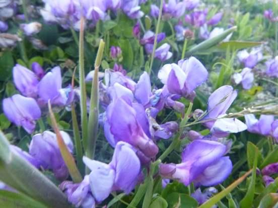 flower 3A