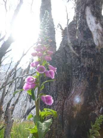 flower 7A